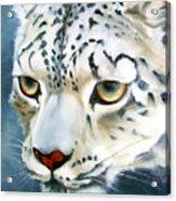 Snowleopard Acrylic Print