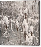Snowtails Acrylic Print