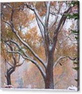 Snowy Autumn Landscape Acrylic Print by James BO  Insogna