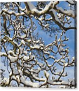 Snowy Branches Acrylic Print