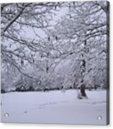 Snowy Branches Acrylic Print