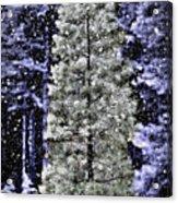 Snowy Day Pine Tree Acrylic Print