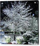Snowy Dogwood Tree At Night Acrylic Print