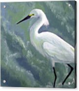Snowy Egret In Water Acrylic Print