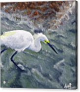 Snowy Egret Near Jetty Rock Acrylic Print
