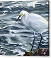 Snowy Egret On Jetty Rock Acrylic Print