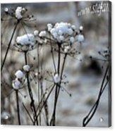 Snowy Flowers  Acrylic Print