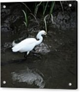 Snowy In The Mud Acrylic Print