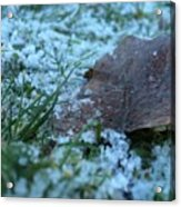 Snowy Leaf Acrylic Print