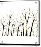 Snowy Line Up Acrylic Print