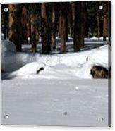 Snowy Log Acrylic Print