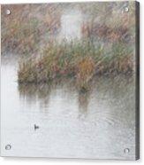 Snowy Marsh With Duck Acrylic Print