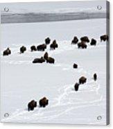 Snowy Migration II Acrylic Print