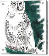 Snowy Owl II Acrylic Print