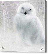 Snowy Owlet Acrylic Print