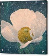 Snowy Poppy Acrylic Print