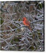 Snowy Red  Acrylic Print