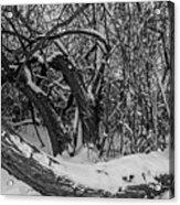 Snowy Tree Bench In Black And White Acrylic Print