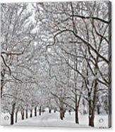 Snowy Treeline Acrylic Print