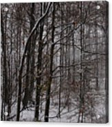 Snowy Woods Acrylic Print