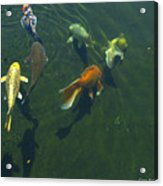 So Koi Acrylic Print