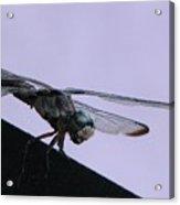So Many Bugs So Little Time Acrylic Print
