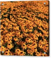 So Many Flowers To Pick From........ Acrylic Print