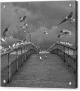 So Many Gulls Acrylic Print