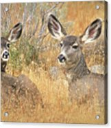 So Much For Your Secret Place... Acrylic Print