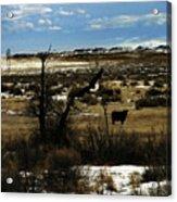 Soaring In Montana Acrylic Print
