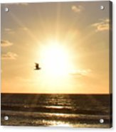 Soaring Seagull Sunset Over Imperial Beach Acrylic Print