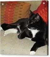 Socks The Cat King Acrylic Print