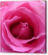 Soft And Pink Acrylic Print
