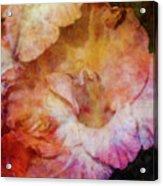Soft As A Peach 3032 Idp_2 Acrylic Print