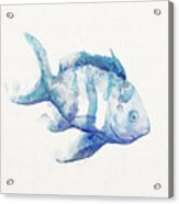 Soft Fish Acrylic Print