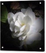 Soft Focus Gardenia Acrylic Print