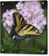Soft Focus Tiger Swallowtail Acrylic Print