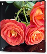 Soft Full Blown Red-orange Roses On Black Background. Acrylic Print
