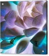 Soft Glow Succulents Acrylic Print