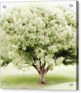 Soft Green Tree Acrylic Print