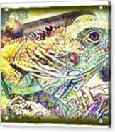 Soft Iguana Acrylic Print