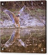 Soft Landing On The Pond Acrylic Print