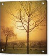 Soft Light In Summerland Acrylic Print