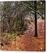 Soft Light In The Woods Acrylic Print