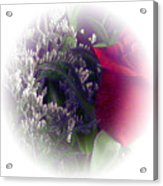 Soft Light Rose Acrylic Print