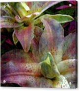 Soft Lilies 3637 Idp_2 Acrylic Print