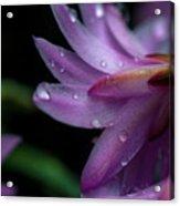 Soft Macro Of Purple Flower Acrylic Print