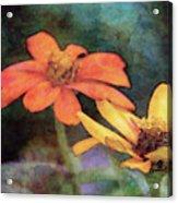 Soft Petals 3058 Idp_2 Acrylic Print
