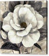 Soft Petals I Acrylic Print