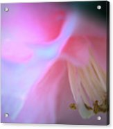 Soft Pink Acrylic Print